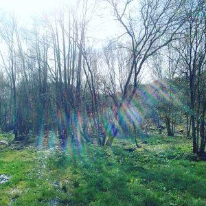 Bosque en Berán (Orense)