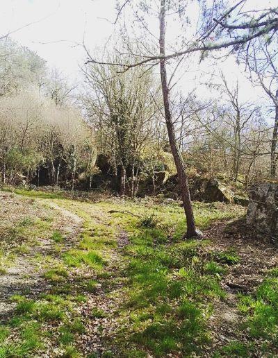 Bosque en O Ribeiro
