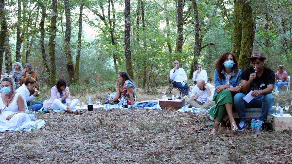 Cata en el Bosque · Ribeiro Land Art